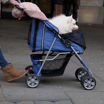 Pet Carriers & Strollers